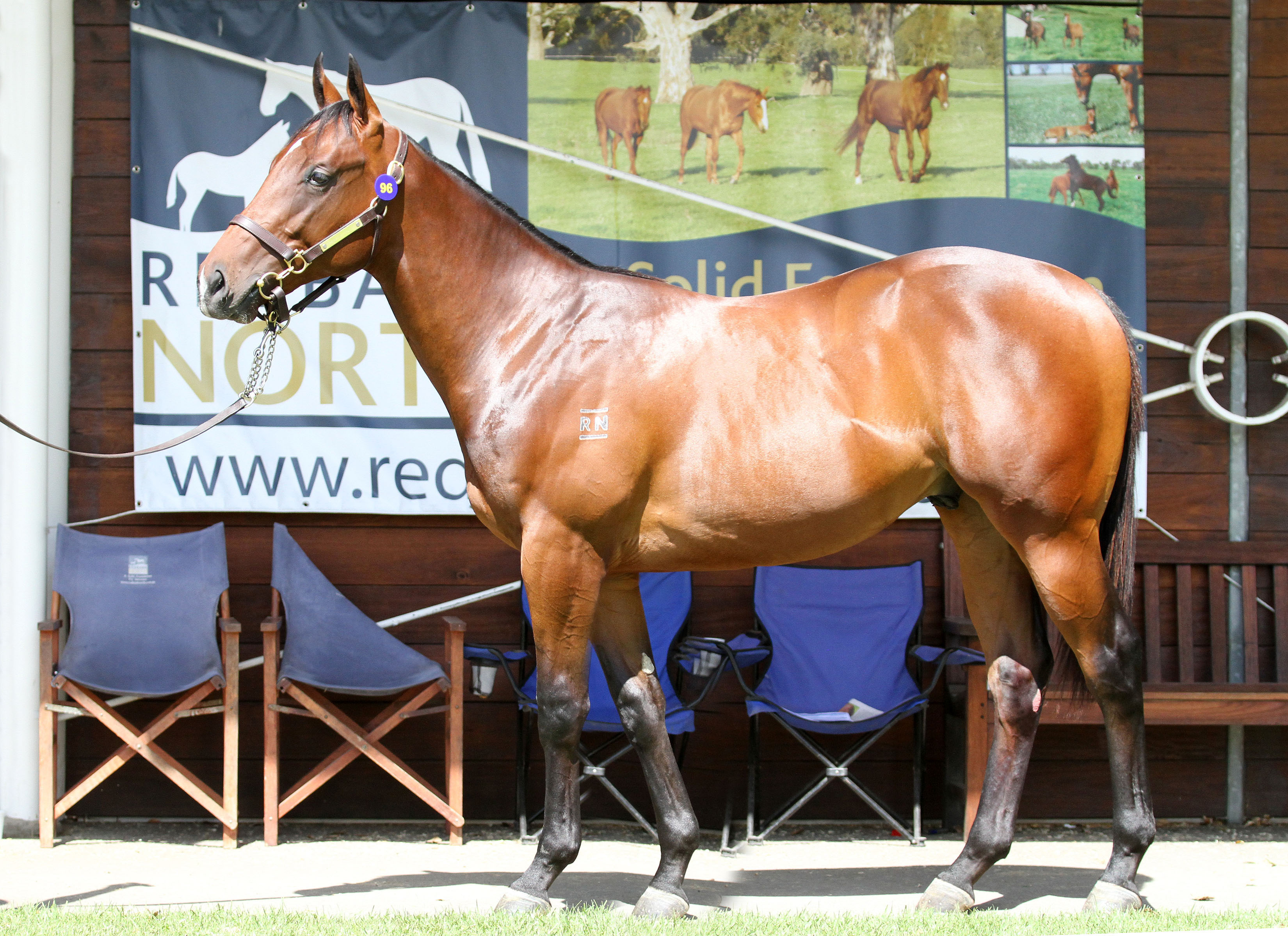 Lot 96,Smart Missile x Mambo Flyer_06-02-2016_GEN_Inglis Classic Yearling Sale__065